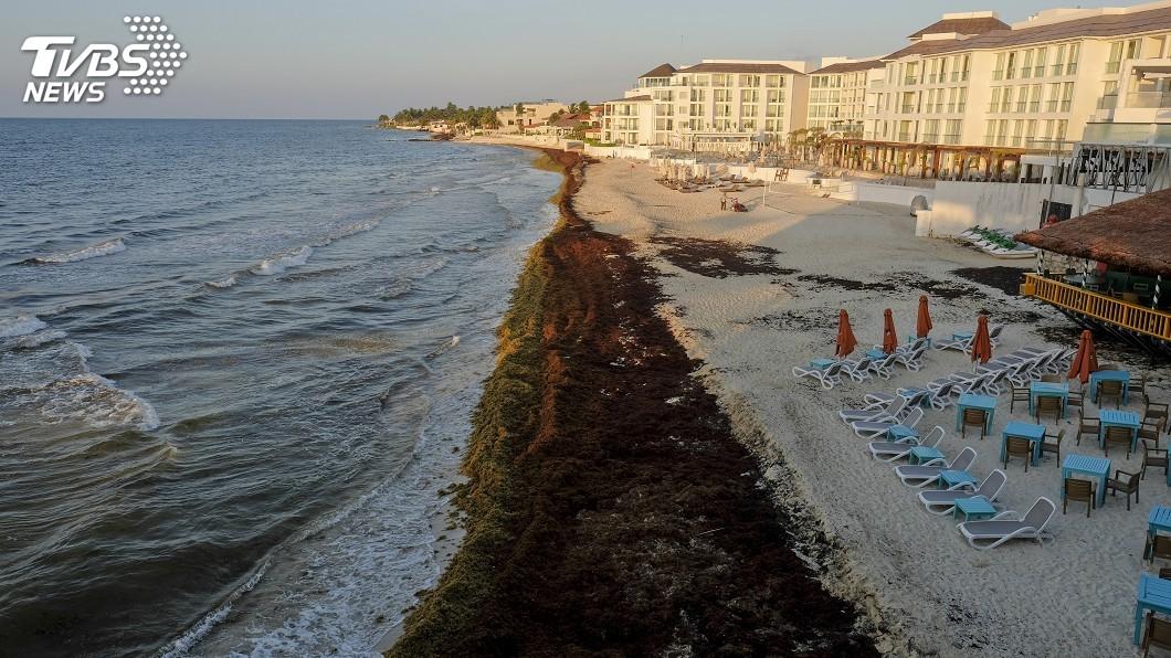 圖/達志影像美聯社 是什麼讓湛藍海水變色了? 馬尾藻毀了邁阿密海灘