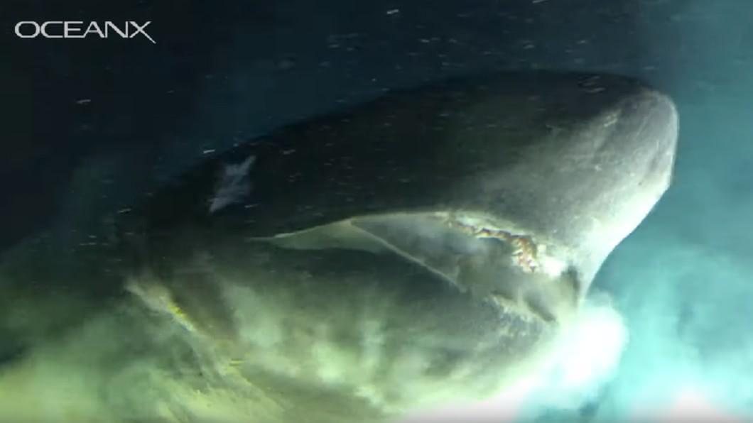圖/翻攝YouTube 深海驚見1.8億年前巨鯊 研究人員嚇壞:比潛水艇還大