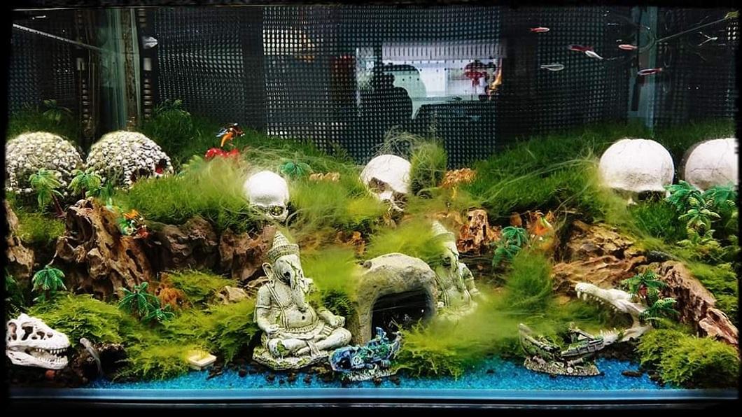 一名養魚有幾十年經驗的水族玩家,日前因應農曆7月設計了一款應景的魚缸造型設計。(圖/翻攝自爆怨公社) 夫應景鬼月設計「超恐怖魚缸」 妻嚇到想請道士驅魔