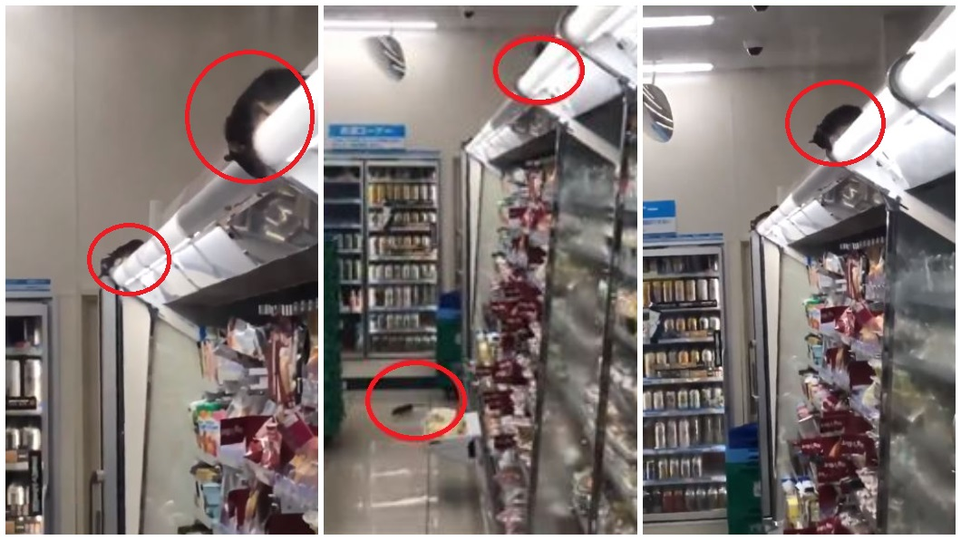 翻攝/YouTube 噁!老鼠大軍攻占超商「開趴」 跳上跳下竄冰箱
