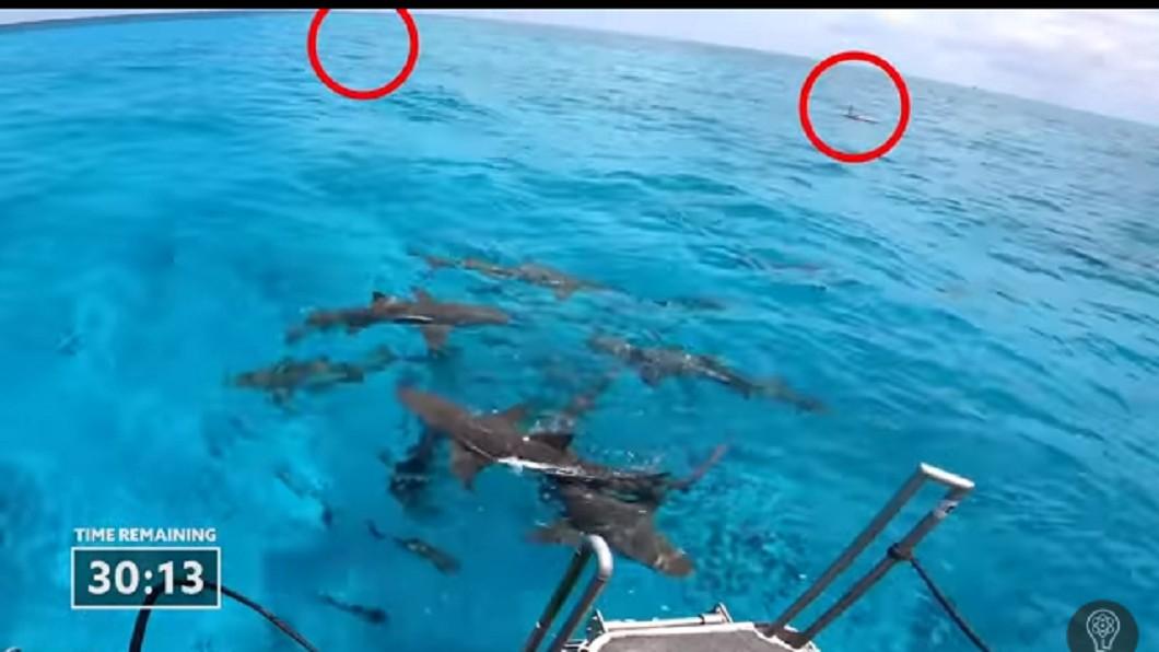 經過半小時人血依舊沒有吸引任何鯊魚。圖/截自YuTube