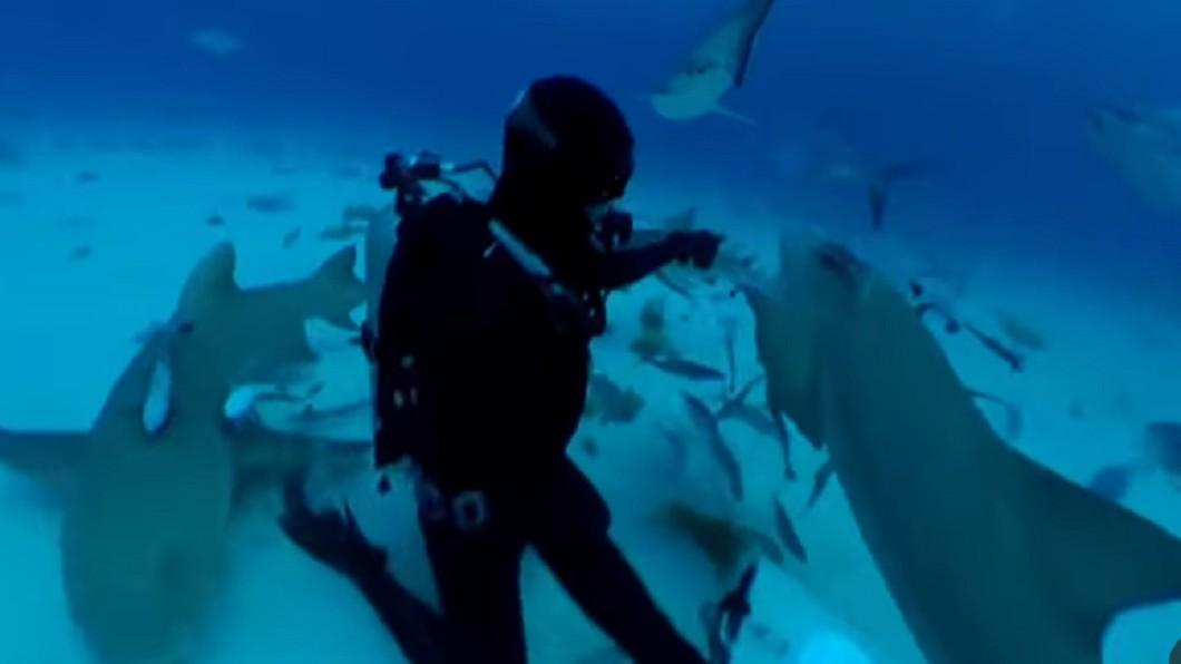 羅伯測試人血對鯊魚的吸引力。圖/截自YuTube