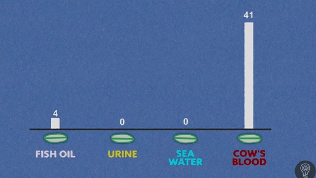 第1階段結果顯示牛血吸引鯊魚靠近。圖/截自YuTube