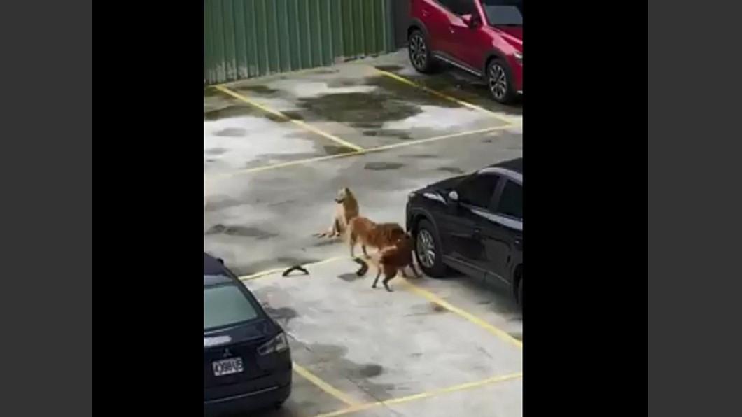 網友看到1隻狗狂咬、2隻狗把風,雖然替車主心疼但也笑說狗狗真專業。圖/翻攝爆廢公社臉書