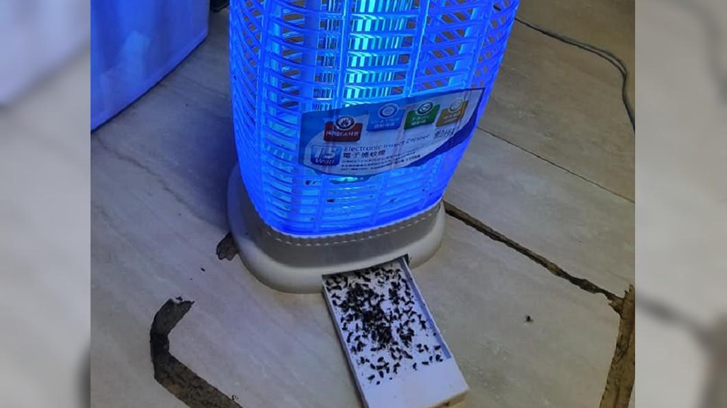 圖/翻攝自「Costco好市多 商品經驗老實說」臉書社團 他買捕蚊燈卻捕到牠 網友笑:一燈兩用!