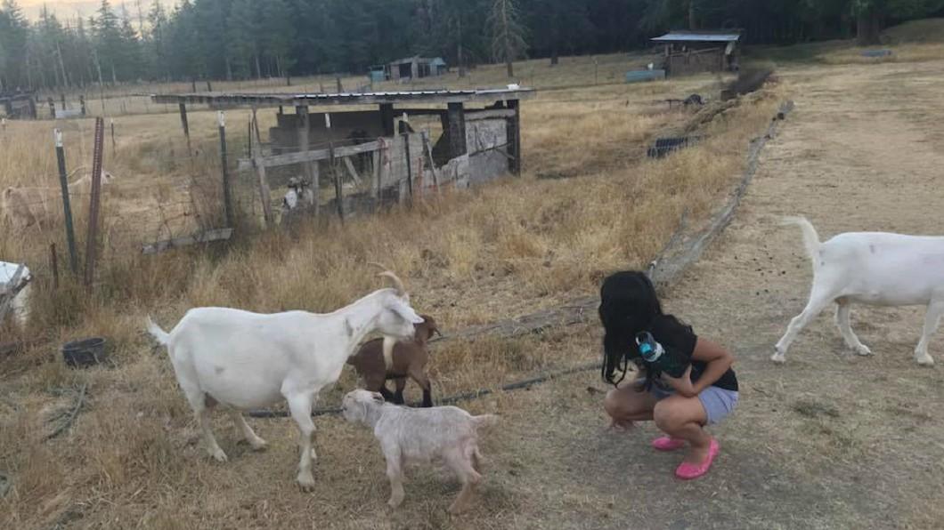 去年7月丁寧帶孩子回老公老家,孩子開心和農場的動物玩耍。圖/翻攝丁寧 Ding Ning臉書