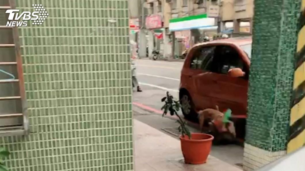 圖/中央社 比特犬咬死流浪狗 檢認定非故意飼主不起訴