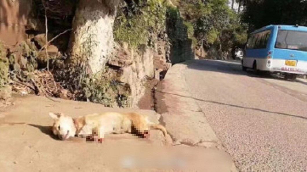 中華田園犬被人發現倒在路邊。圖/翻攝自微博 太殘忍!小狗遭人砍斷四肢丟棄 40度高溫曝曬慘成乾屍