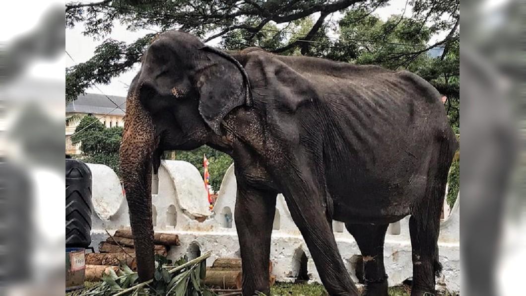 母象年歲已高,骨瘦如材。圖/翻攝自SaveElephantFoundation臉書
