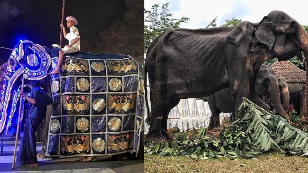 母象華服下使虛弱的身軀,令人鼻酸。圖/翻攝自SaveElephantFoundation臉書