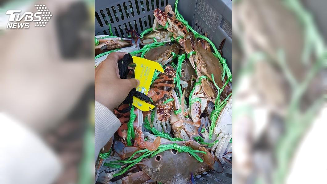 圖/中央社 蟳蟹繁殖期將至 違規捕撈最高可罰15萬元