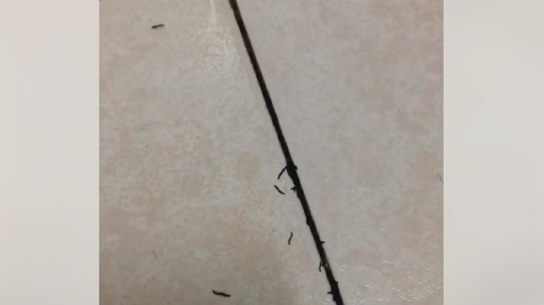 浴室地板有許多黑蟲。圖/翻攝自爆怨公社臉書 浴室地板竄出「黑蟲軍團」 她崩潰:殺都殺不完