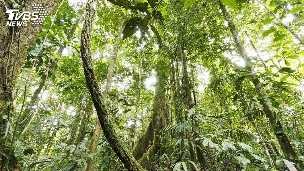 示意圖/TVBS 繼德國暫停捐助 挪威凍結亞馬遜森林保護資金