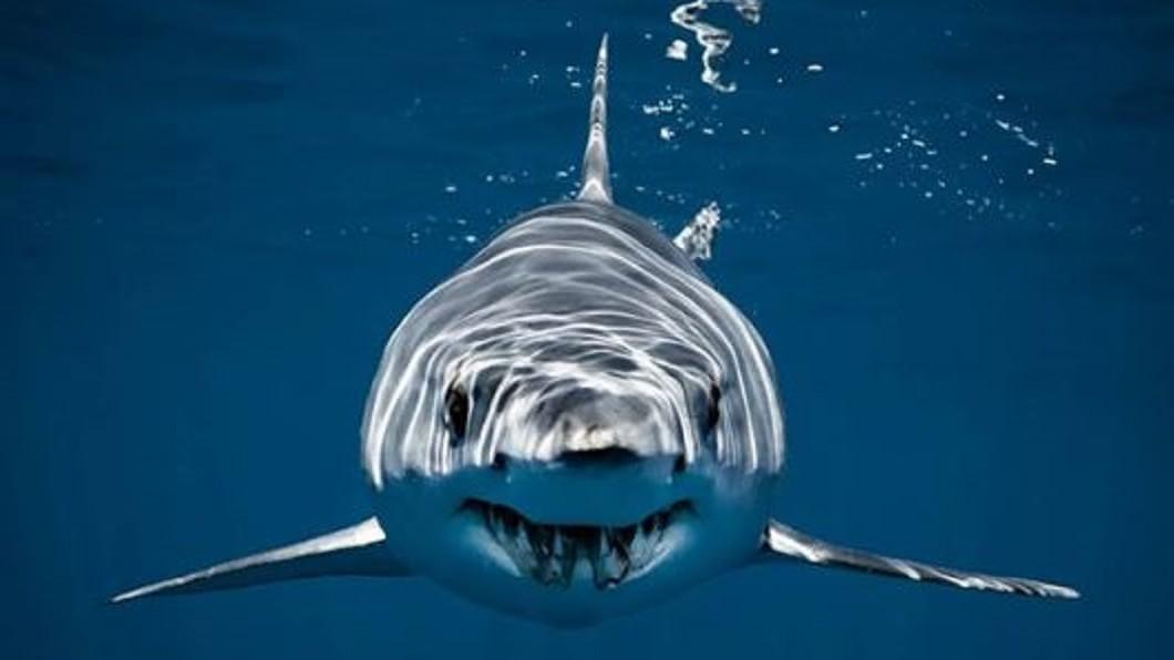 圖/翻攝自Cristina Mittermeier Instagram 鯊魚跟船長搶魚! 打贏「拉扯戰」飽餐一頓