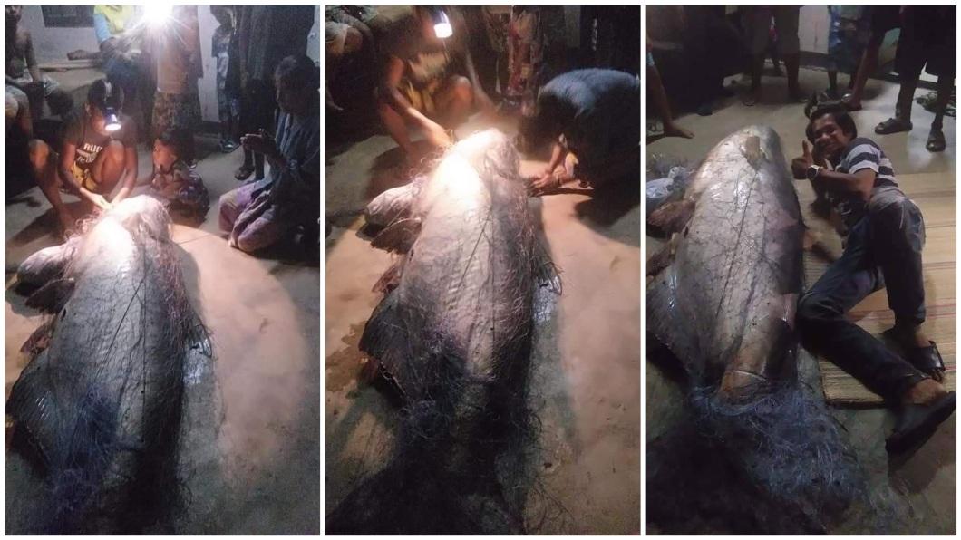 村民將這條巨鯰視為河神,紛紛前往參拜,但拜完之後就將牠分解賣錢,賺到1.2萬泰銖。(圖/翻攝自臉書)