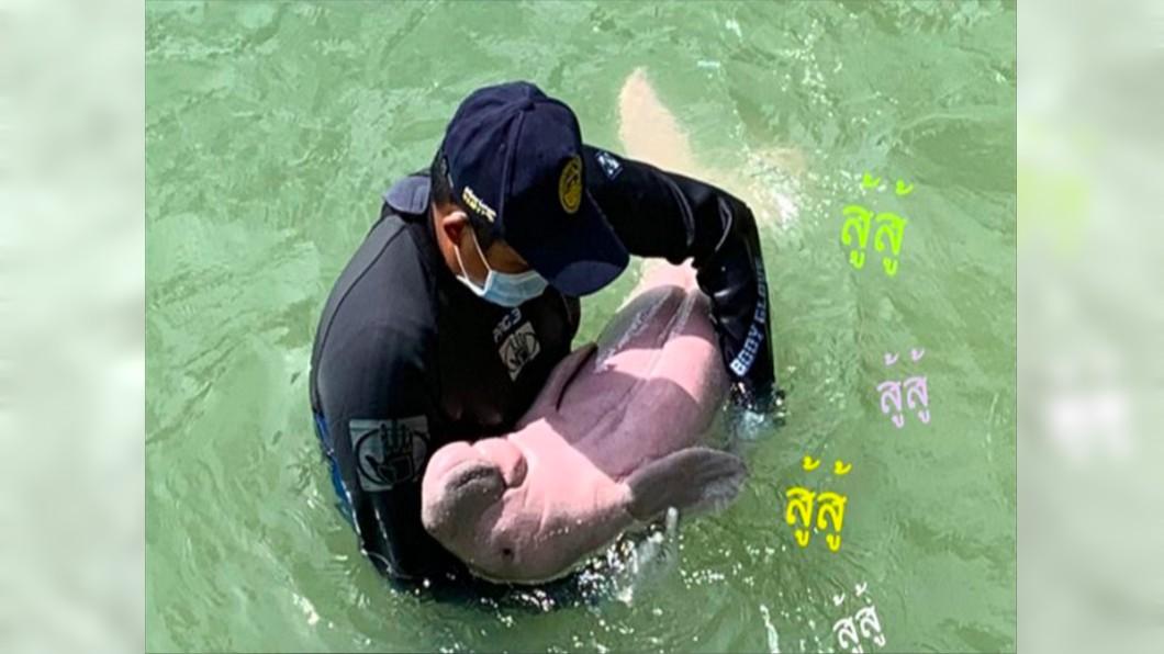 儒艮被視為小美人魚原形。圖/翻攝自Twitter 網紅「小美人魚」慘死 解剖驚見胃部全是塑膠