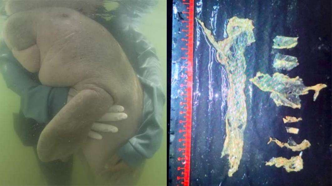 瑪瑞姆的胃都是塑膠。圖/翻攝自(左)Twitter、(右)Nantarika Chansue臉書