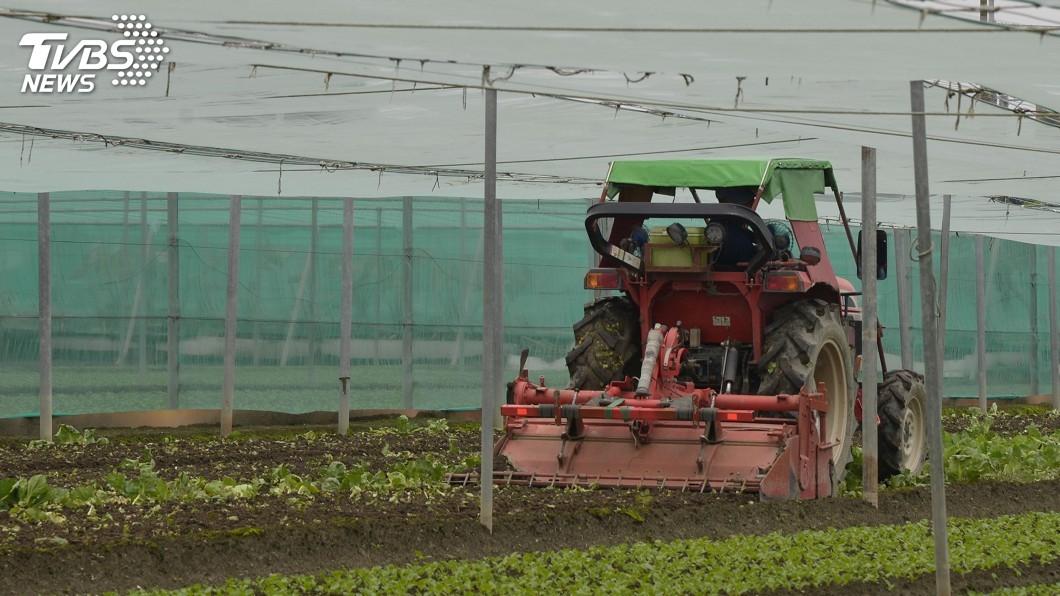 圖/中央社 連日降雨侵襲蔬菜受損 張麗善籲啟動天然災害救助
