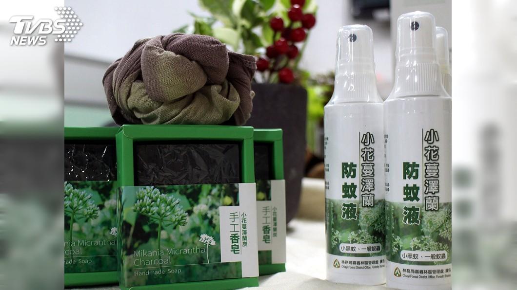 圖/中央社 嘉義移除小花蔓澤蘭 多元利用製成防蚊液