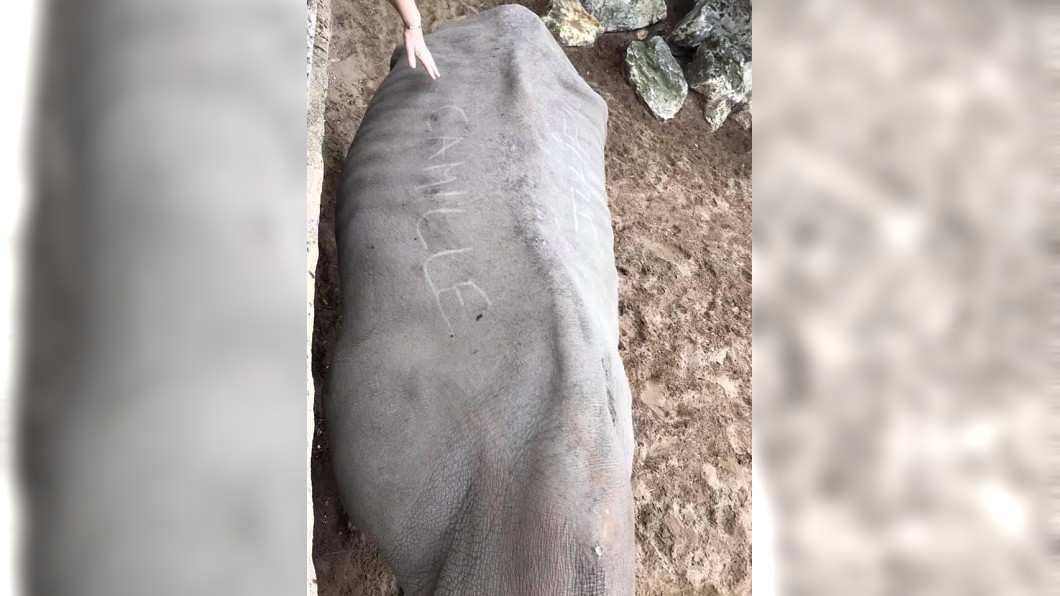 圖/翻攝自Royan News臉書 遊客用指甲在犀牛背上刻字 惡劣行為引網友圍剿