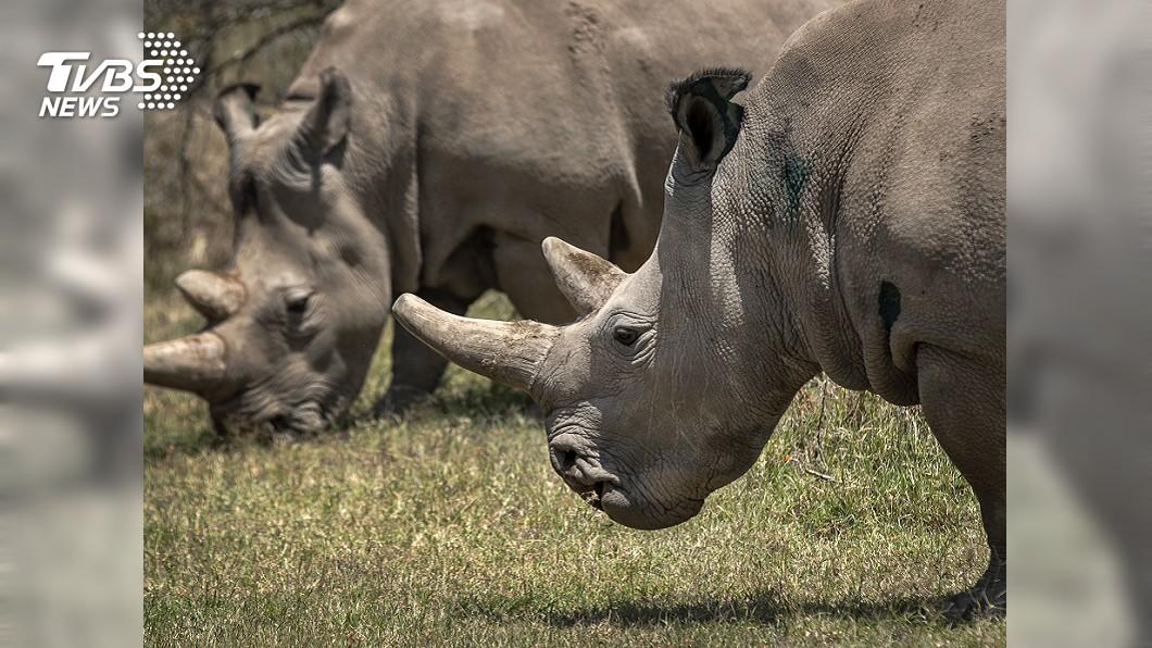 圖/達志影像美聯社 日動物園死亡意外 為犀牛塗藥竟遭撞死