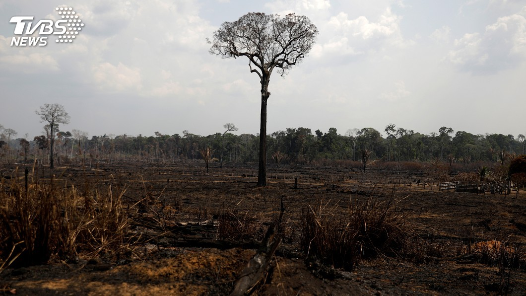 圖/達志影像路透社 地球之肺在燃燒 亞馬遜生態浩劫你該關心的事