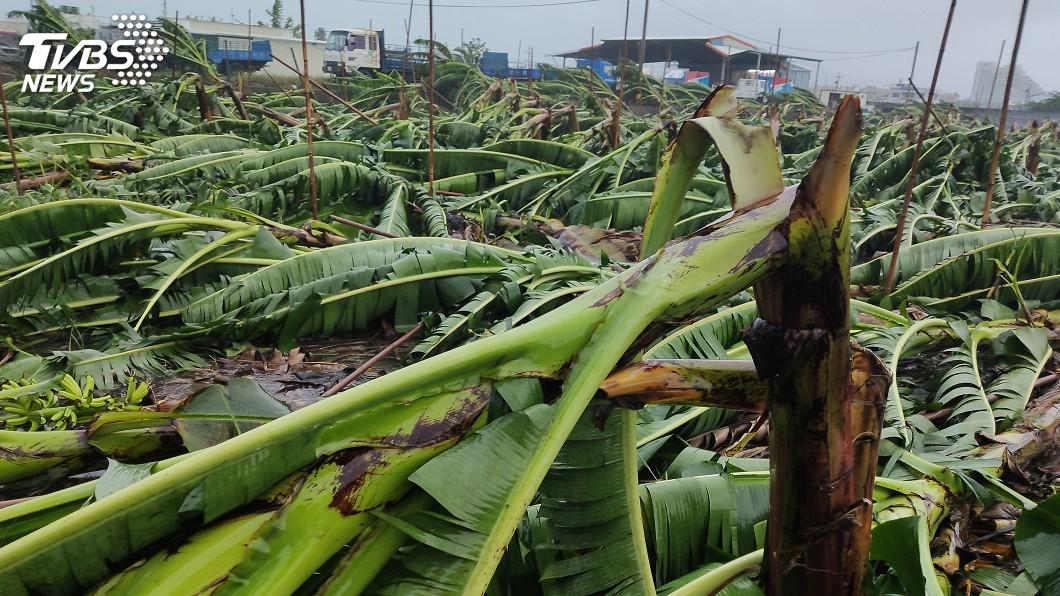 圖/中央社 颱風白鹿累計農損逼近1億元 台東最傷