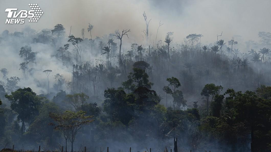 圖/達志影像美聯社 生存生態難兩全 巴西農夫:孤立無援只好砍樹