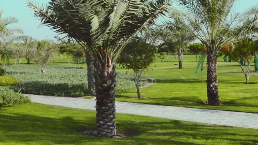 圖/翻攝自euronews 佔地6座橄欖球場 走一遭杜拜迷人的博物館