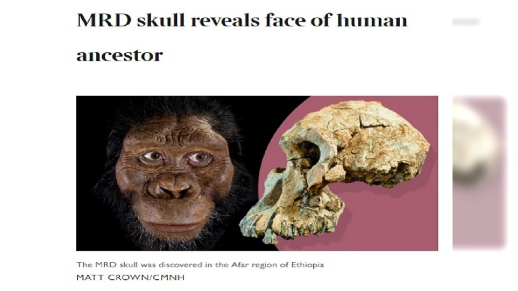 圖/翻攝自The Times網站 380萬年前原始人頭顱出土 顛覆演化知識