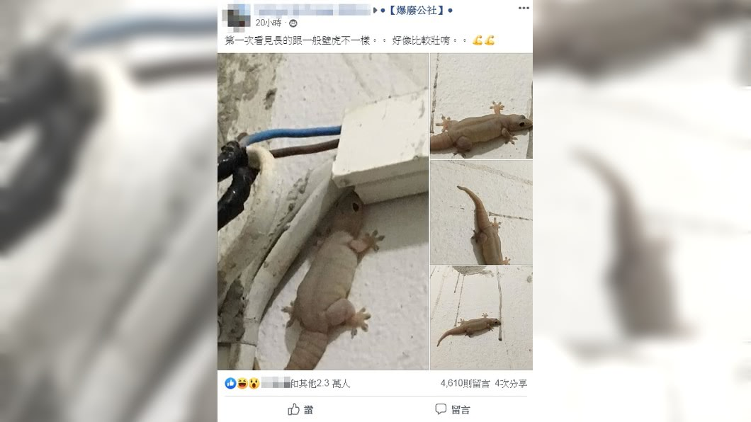 圖/翻攝自臉書社團「爆廢公社」