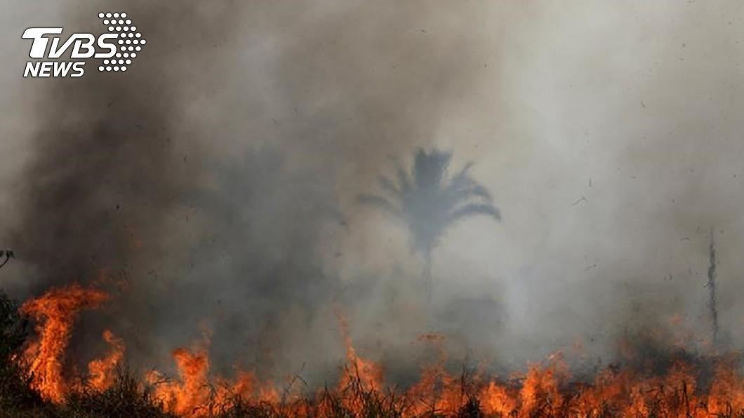 圖/達志影像路透社 亞馬遜森林野火燒不停 李奧納多呼籲大眾「別吃牛」