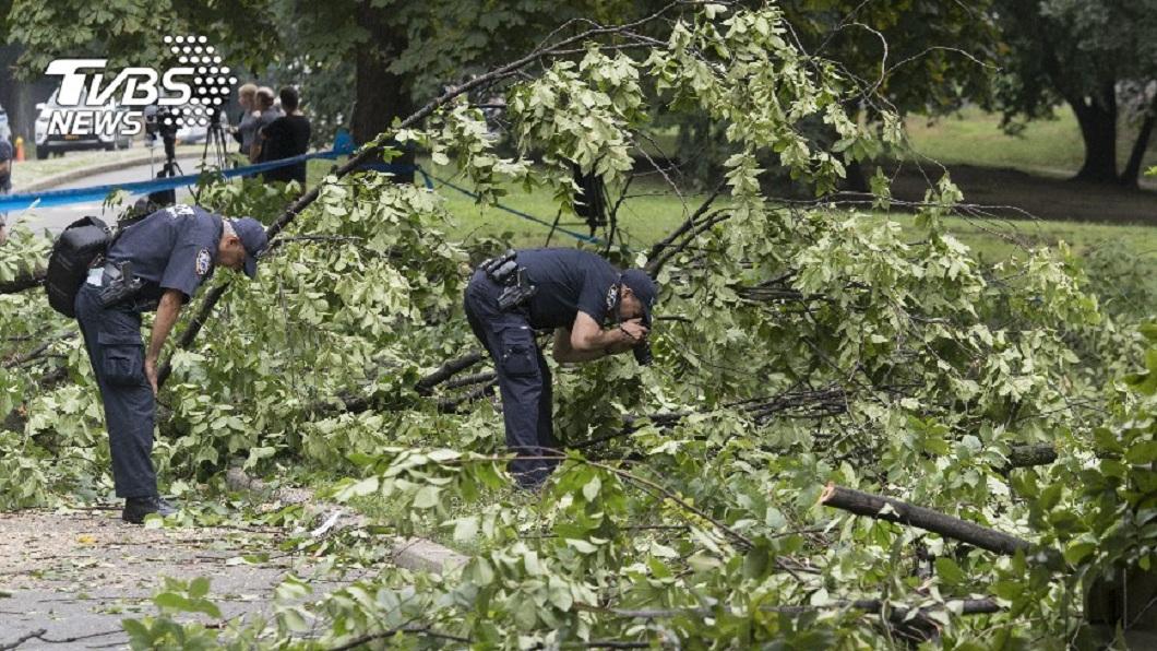 修剪樹木也是一項專業工作,但其實也藏著高度危險性。(示意圖/TVBS) 恐怖!園丁修樹捲入碎木機 同事回來只見血水