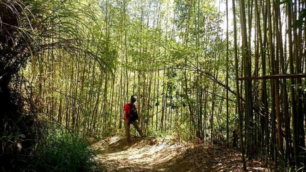 國慶連假玩法推薦-新竹司馬庫斯部落。(圖/Tripbaa趣吧!亞洲自由行專家)