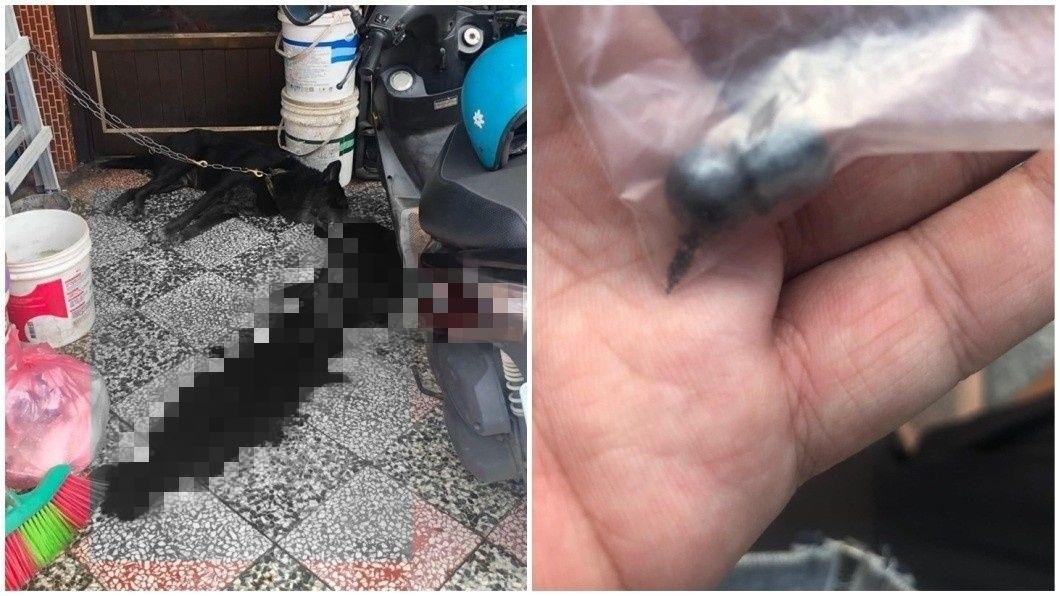 小黑狗當慘血流滿地慘死,警方調查時發現有彈孔。(圖/翻攝自臉書)
