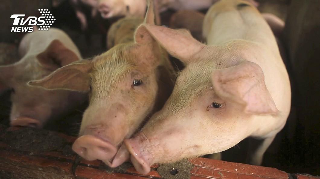 圖/達志影像美聯社 南韓爆首例非洲豬瘟 攜豬肉入境罰20萬