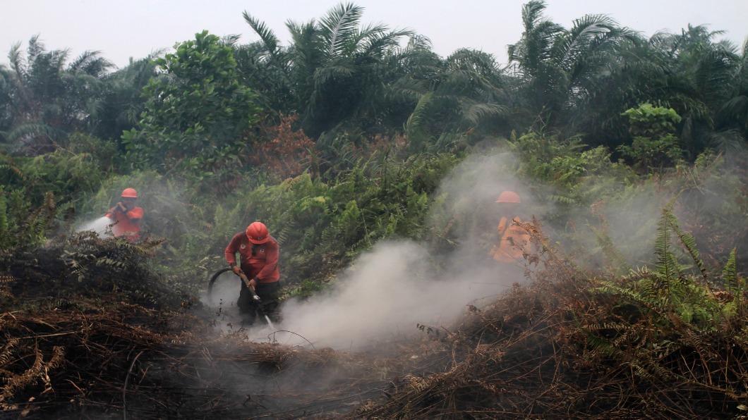 圖/達志影像美聯社 印尼「火耕」毀林 野火延燒.霾害禍及星馬