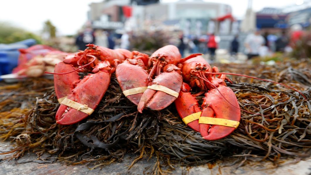 圖/達志影像路透 加拿大買走美國龍蝦 「洗產地」後銷中國