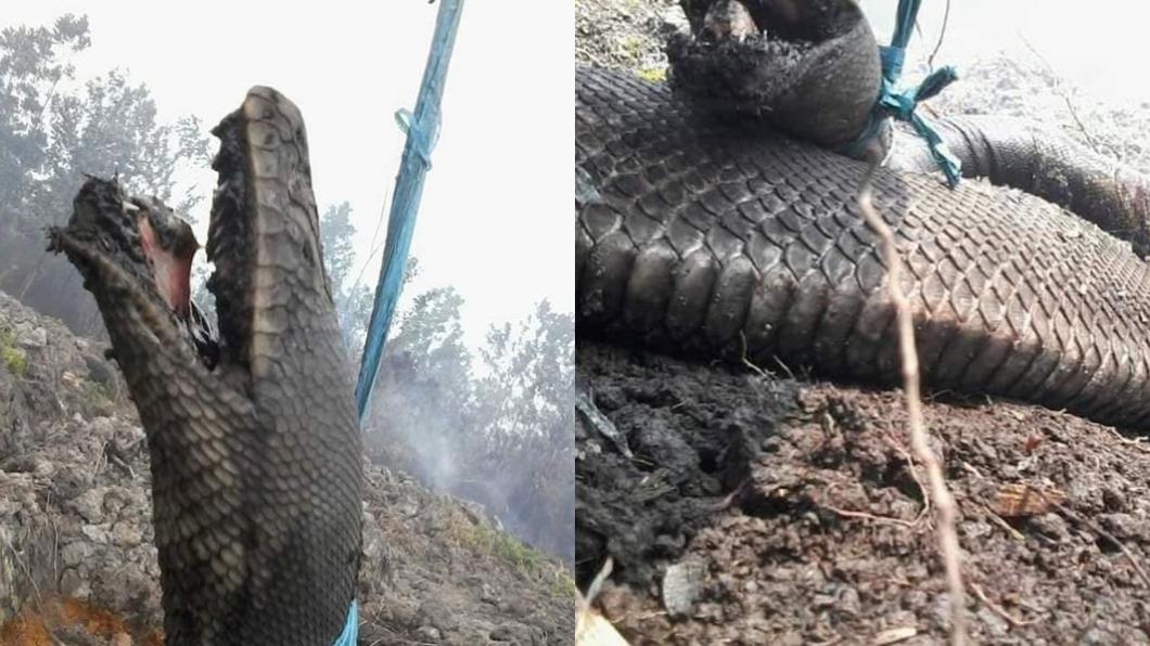 圖/翻攝自臉書粉專「Garda Satwa Foundation」 印尼野火狂燒!巨蟒「驚悚張嘴」成焦屍 網友心痛