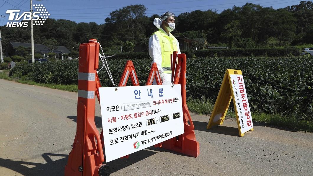 圖/達志影像美聯社 遏止非洲豬瘟蔓延 南韓劃定6市郡為防疫區