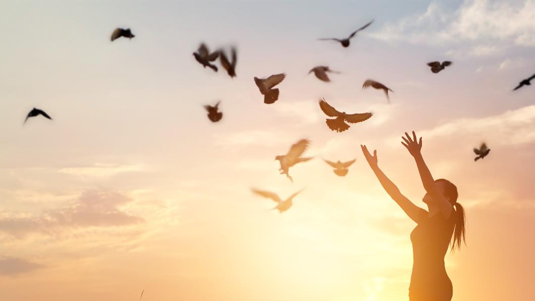 示意圖/TVBS 世上最美的鳥!渾圓「粉紅毛怪」 驚艷網友:天使在飛