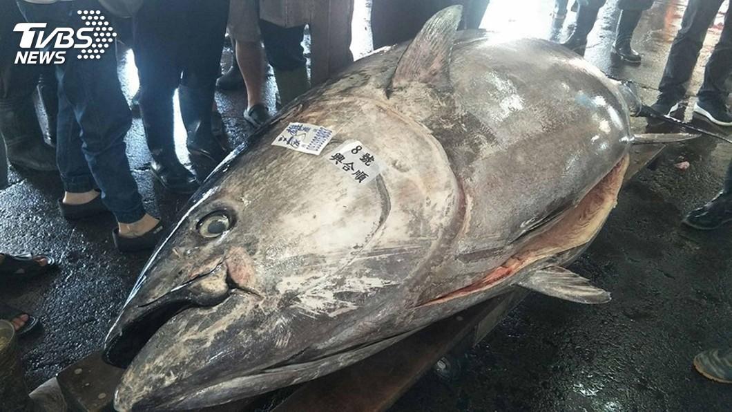 圖/東港區漁會提供 網傳台日鮪魚配額交換損失4億元 警方查辦假消息
