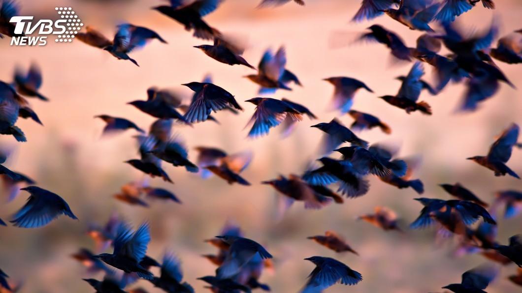 示意圖/TVBS 全球生態危機 研究:北美洲鳥類50年少近30億隻