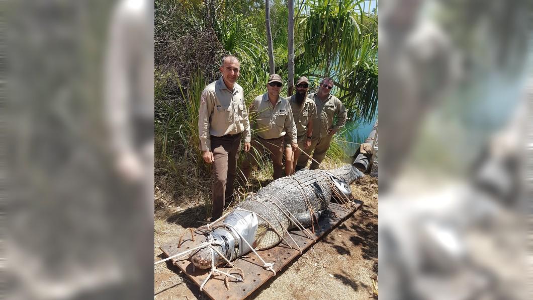 圖/翻攝Northern Territory Parks and Wildlife臉書