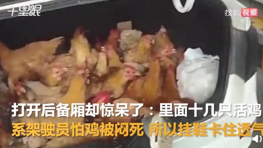 圖/翻攝自搜狐视频微博