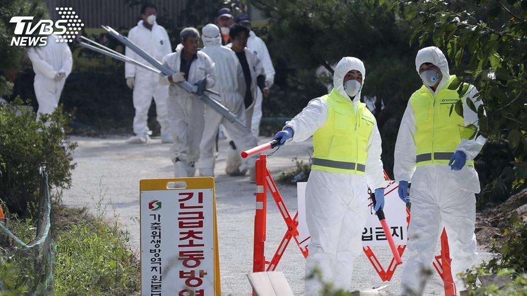 圖/達志影像美聯社 抗非洲豬瘟 南韓調派數百士兵非軍事區抓野豬