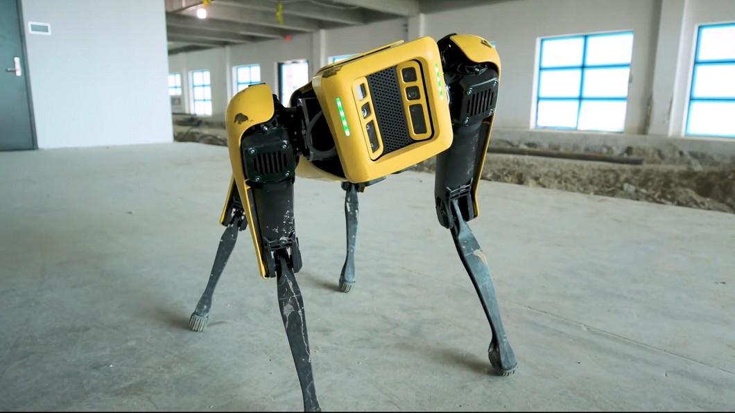圖/翻攝自the verge 新機器狗平衡感佳 太陽劇團考慮找它表演