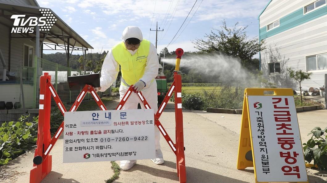 圖/達志影像美聯社 南韓非洲豬瘟增至9例 疫情疑從北韓經水路引入