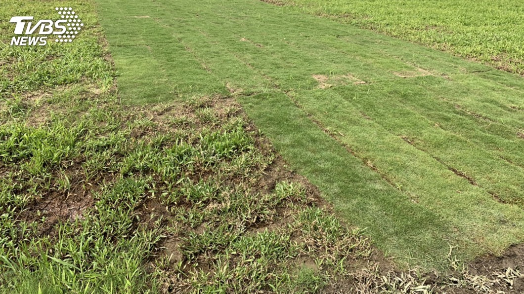 圖/中央社 大都會公園湧入大批民眾抓寶 新鋪草皮又見損壞
