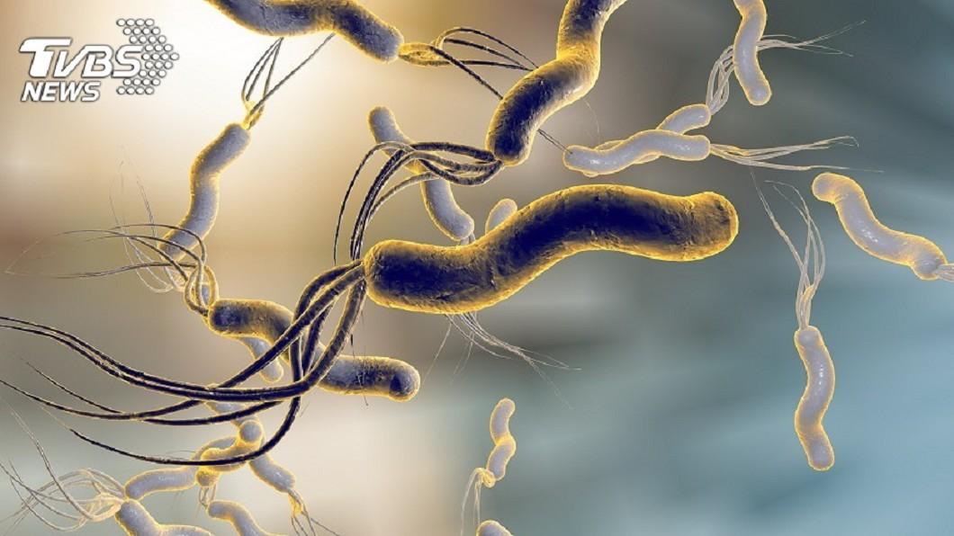 示意圖/TVBS 和幽門桿菌共存是迷思 罹胃癌風險恐增5.6倍